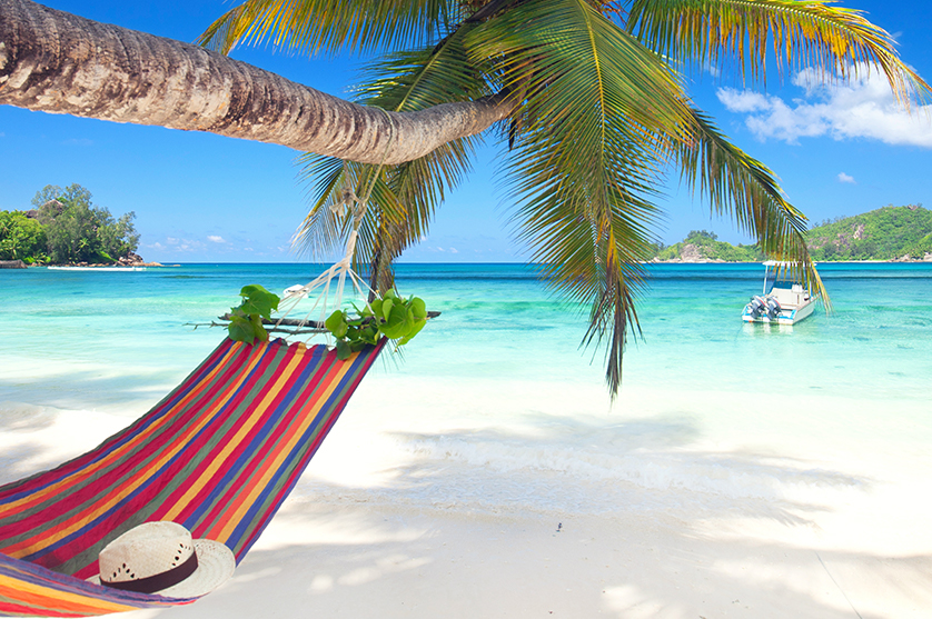 A hammock hangs from a palm tree on a peace
